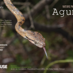 Agumbe-Poster-2018-
