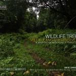 TREKKING-VELLIKULANGARA-FOREST